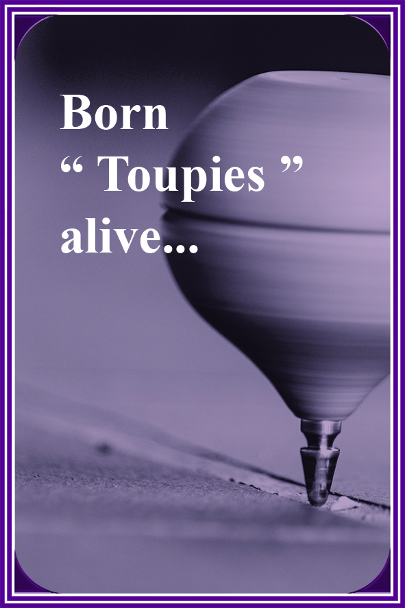 born toupies alive